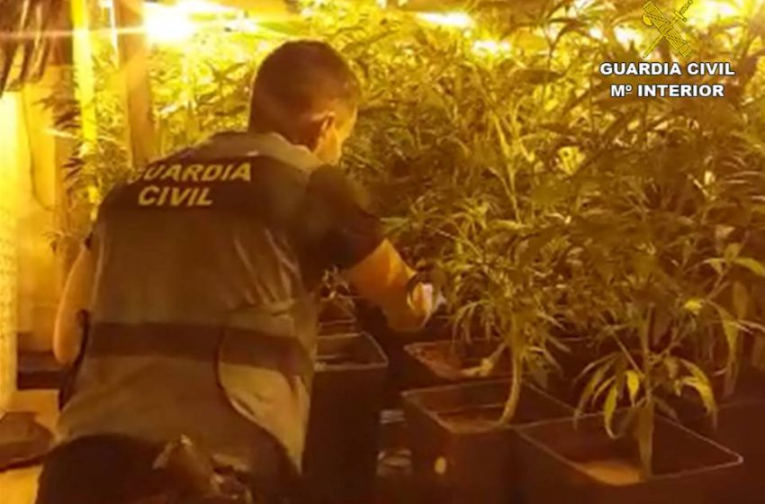 A father and son arrested for growing marijuana in a house in Xàbia
