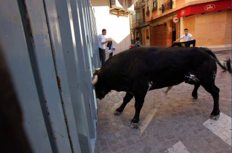 Vila-real will host a venue for bullfighting events in support of the sector and in defence of the 'bou al carrer
